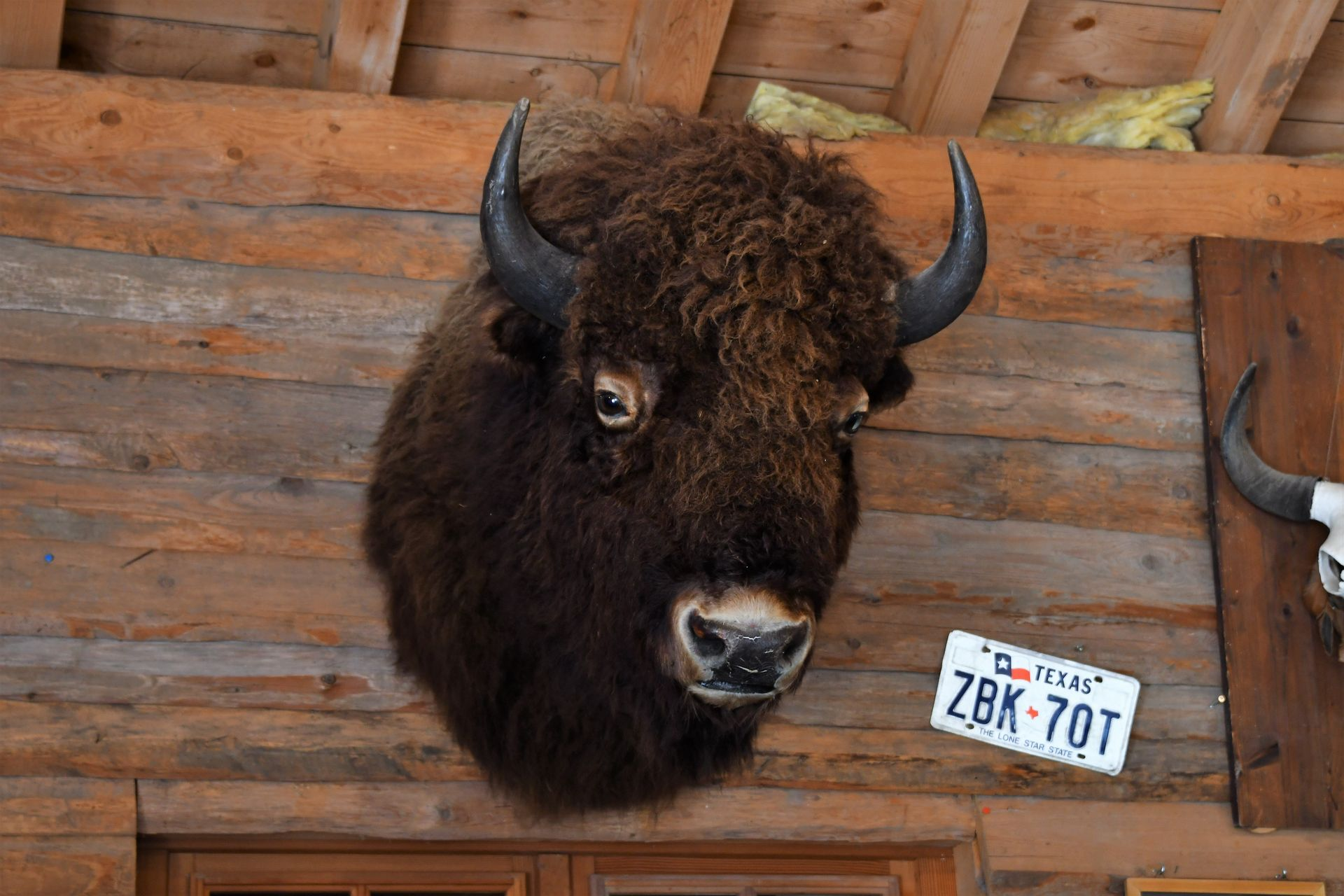 Sortie Bison